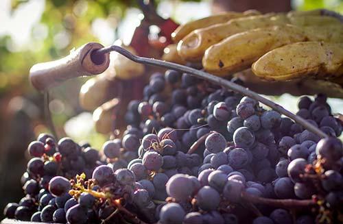 Travail de la vigne au Château Montlisse