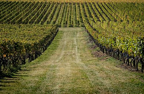 Travail de la vigne au Château Destieux